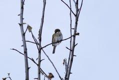 Un petit oiseau de forêt se reposant sur une branche Images libres de droits