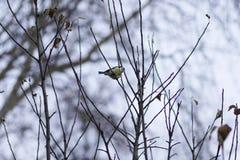 Un petit oiseau de forêt se reposant sur une branche Photographie stock