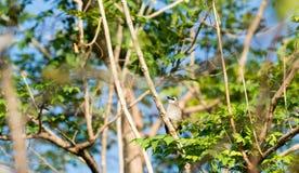 Un petit oiseau est sur une branche Photos stock