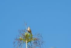 Un petit oiseau est sur une branche Photographie stock libre de droits