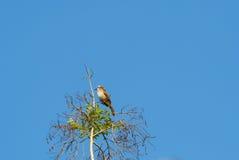 Un petit oiseau est sur une branche Image libre de droits