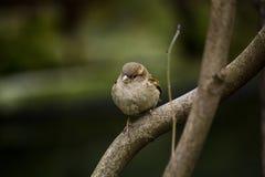 Un petit oiseau mignon dans le parc Monceau de Paris Image stock