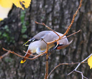 Un petit oiseau sur une branche d'arbre Photo stock