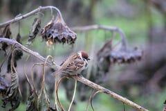 Un petit oiseau sur une branche d'arbre Images libres de droits
