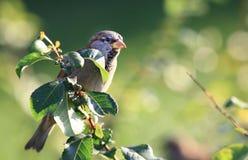 Un petit oiseau sur une branche d'arbre Image stock
