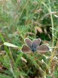 un petit papillon se repose sur une lame d'herbe photographie stock