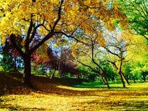 Un petit peu d'automne Photographie stock
