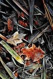 Un petit peu de Frost 5 - l'Ecosse Photos libres de droits