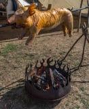 Un petit porc entier sur une brochette au-dessus d'un feu des rondins empilés est rôti et grillé images libres de droits