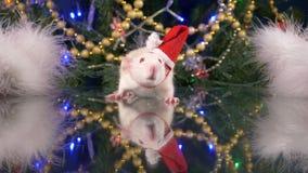 Un petit rat blanc dans un chapeau de Santa dans la perspective de l'arbre de Noël regarde la caméra symbole animal de banque de vidéos