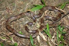 Un petit serpent au sol photos stock