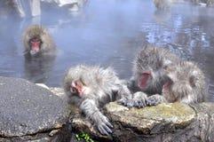 Un petit singe choyé par son parent intéressé Image libre de droits