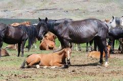 Un petit troupeau de chevaux dans le corral Images stock