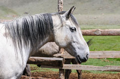 Un petit troupeau de chevaux dans le corral Image stock