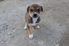 Un peu chien en Bulgarie - mieux frient des personnes Photo stock