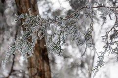 Un peu d'étincelle dans la forêt Photos stock