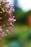 Un pezzo di fiore Immagine Stock