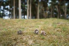 Un pezzo di foresta fotografia stock libera da diritti