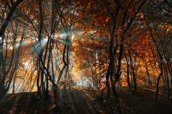 Un pezzo di luce Fotografie Stock