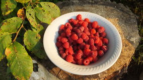 Un piatto dei lamponi rossi su fondo di legno alla luce del sole immagine stock libera da diritti