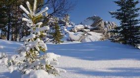 Un piccolo abete in una foresta di inverno archivi video