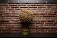 Un piccolo albero è sulla tavola Studio murato mattone fotografia stock libera da diritti