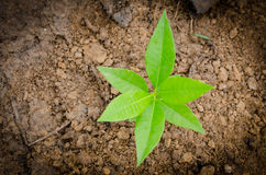 Un piccolo albero Fotografia Stock Libera da Diritti