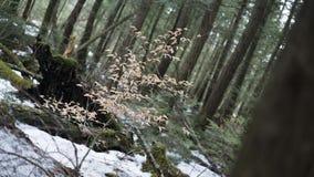 Un piccolo albero Fotografia Stock