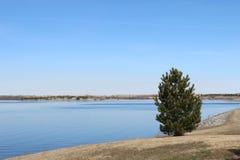 Un piccolo albero dal lato di un lago sotto il cielo blu Fotografie Stock