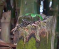 Un piccolo albero si sviluppa sull'albero immagini stock