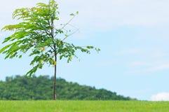 Un piccolo albero su verde fotografia stock
