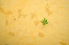 Un piccolo albero sulla sabbia Immagini Stock