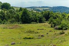 Un piccolo burrone invaso con gli alberi e campi che allungano su una collina dietro nelle forme rettangolari Fotografia Stock