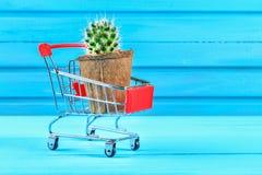 Un piccolo cactus in un mini carrello rosso del supermercato su una tavola di legno blu Fotografie Stock