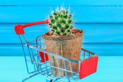 Un piccolo cactus in un mini carrello rosso del supermercato su una tavola di legno blu Fotografie Stock Libere da Diritti