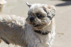 Un piccolo cane fotografia stock
