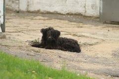 Un piccolo cane Immagini Stock Libere da Diritti