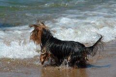 Un piccolo cane ad una spiaggia, tutta noi Fotografia Stock Libera da Diritti