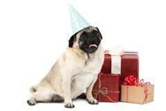 Un piccolo cane dolce con un cappuccio festivo si siede accanto al regalo Isolato su priorità bassa bianca Fotografia Stock Libera da Diritti