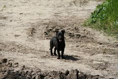 Un piccolo cane nero è fotografie stock