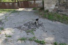 Un piccolo cane randagio si siede su un asfalto rotto sui precedenti di un portone traballante del metallo Immagini Stock