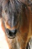 Un piccolo cavallo Immagini Stock Libere da Diritti
