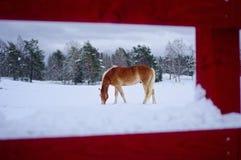 Un piccolo cavallo nell'inverno fotografie stock libere da diritti