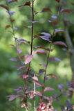 Un piccolo cespuglio di tre ramoscelli sottili con le foglie Immagini Stock Libere da Diritti