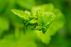 Un piccolo clamber delle formiche sulla foglia della pianta fotografie stock libere da diritti
