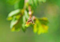 Un piccolo clamber delle formiche sulla foglia della pianta. Macro foto fotografia stock