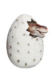 Un piccolo dinosauro delle coperture rotte immagine stock libera da diritti
