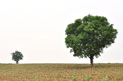 Un piccolo e grande albero con nuovo sviluppo del foglio Fotografie Stock Libere da Diritti