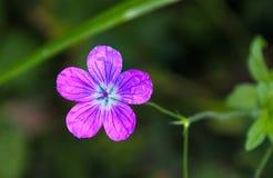 Un piccolo fiore Immagini Stock Libere da Diritti