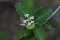 Un piccolo fiore Fotografie Stock